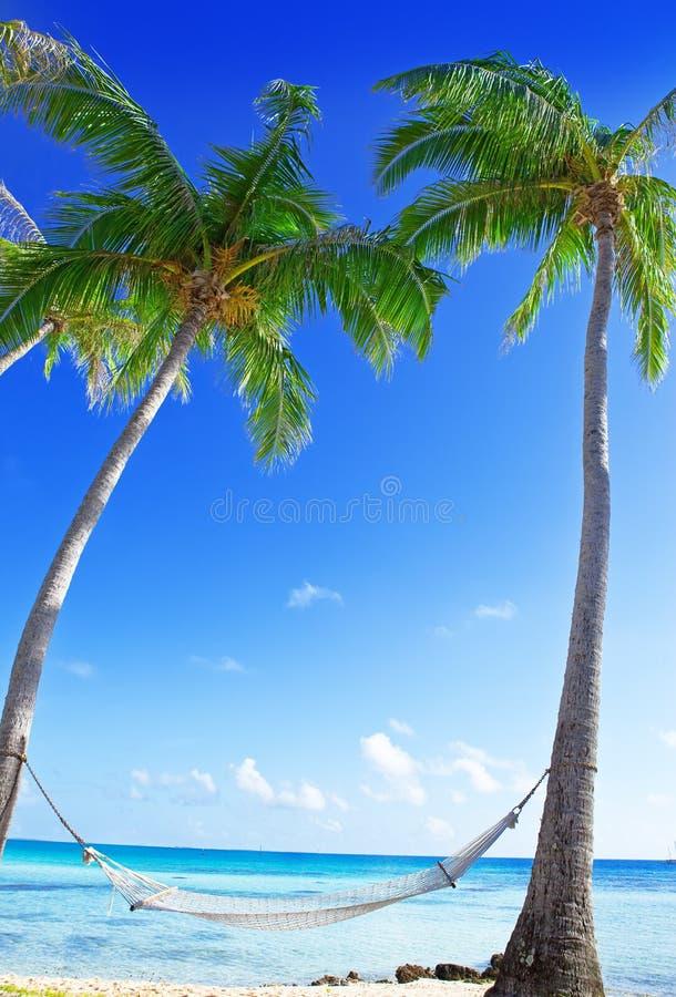 Hammock between palm trees stock photo