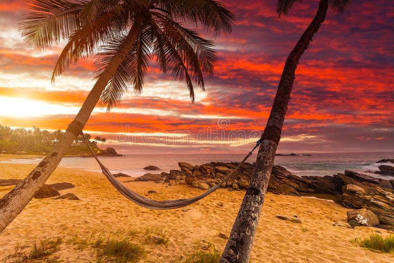 Hammock on palm trees at sunset. Tropical resort, vacation at sea stock photos