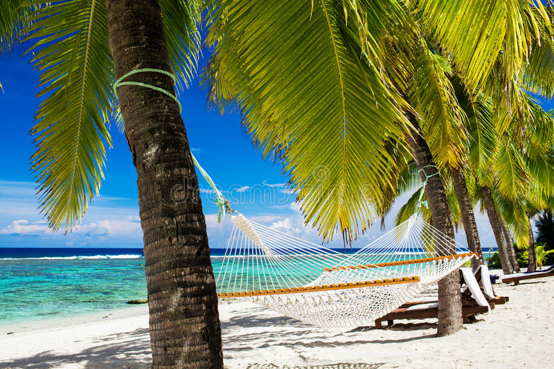 Download Hammock Between Palm Trees On Tropical Beach Stock Image - Image: 24055215