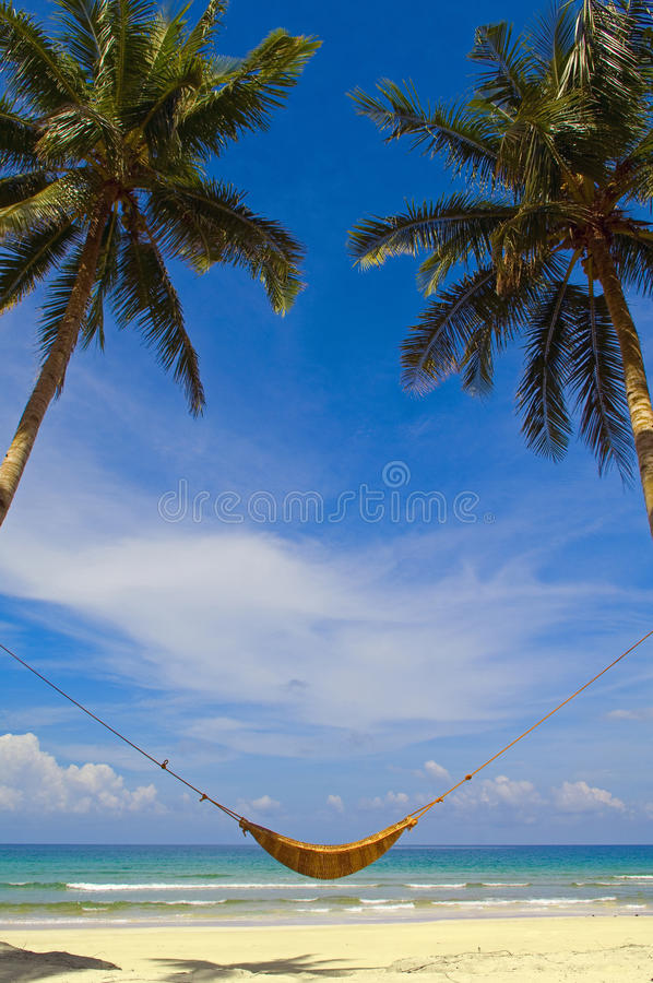 Hammock and palms
