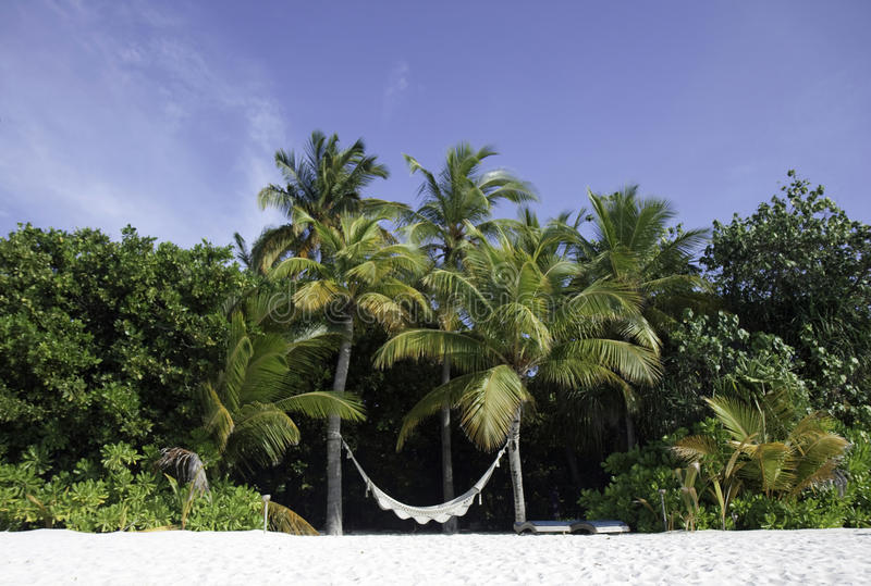Hammock on a tropical beach, Maldives stock photography