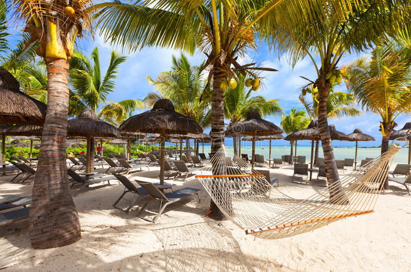 Hammock on tropical beach with palm leaf thatch roofing umbrellas and palm trees in the background. Luxurious vacations on Mauritius, honneymoon tropical island stock image