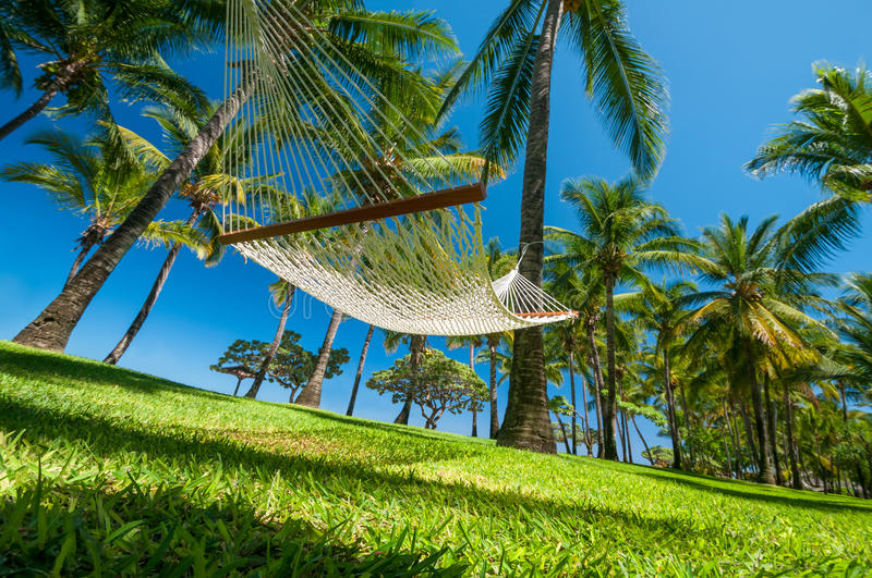 Download Hammock on tropical beach stock photo. Image of travel - 33966830