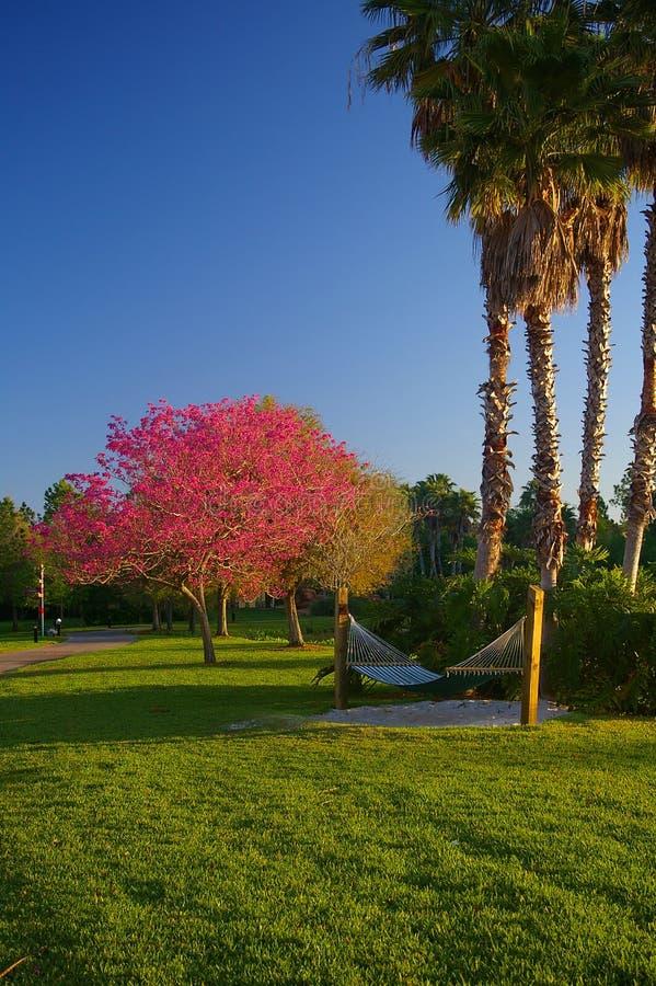 Hammock under palm trees at sunrise. Comfortable hammock in the shade of palm trees as the sun rises stock images