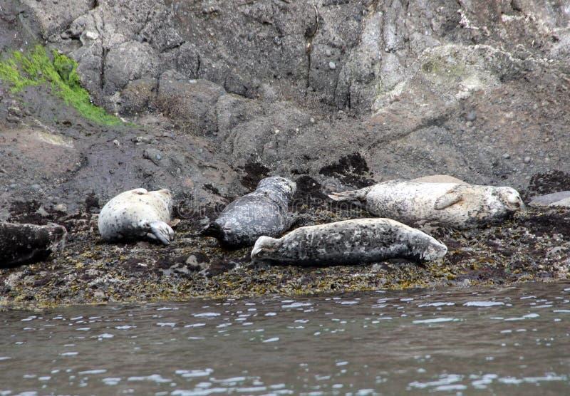Hamnskyddsremsor på den Spiden ön av kust av British Columbia arkivfoto