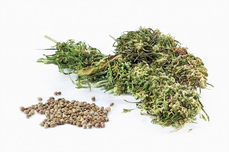 Hampafrö och torkat cannabisris royaltyfria foton