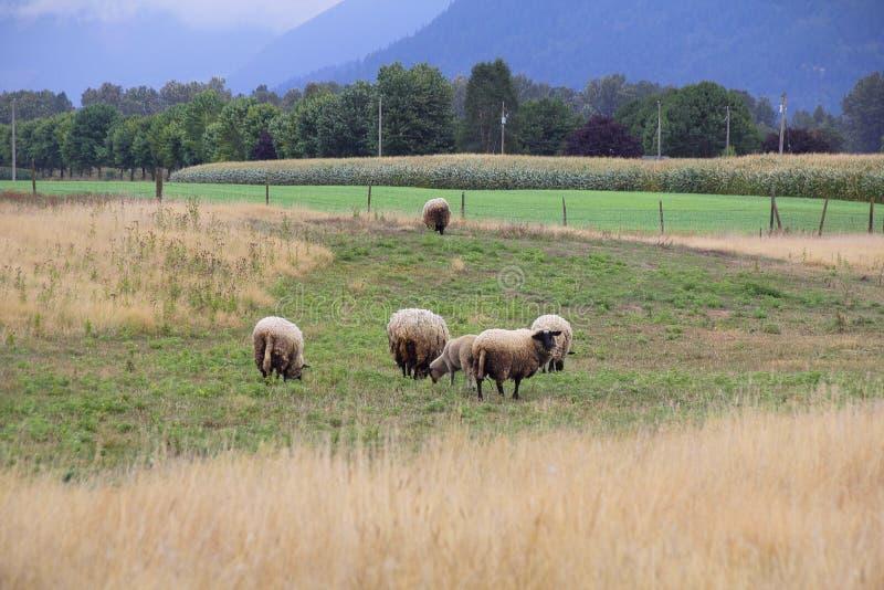 Hampshire cakle w dolinie obrazy stock