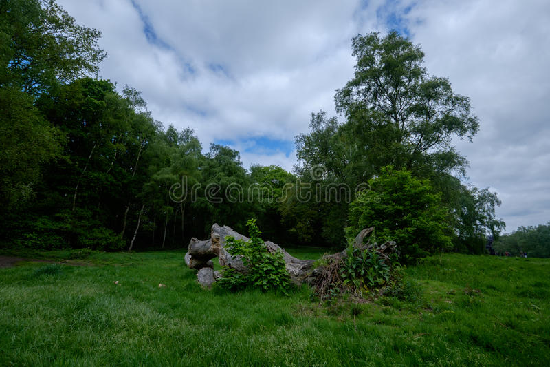 Hampstead荒地公园 图库摄影