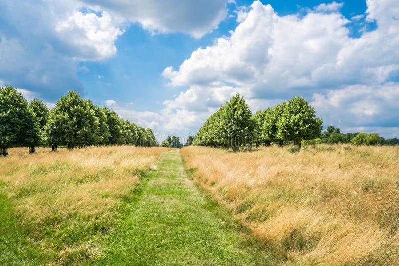 Hampton Court Park a Londra del sud, Regno Unito immagine stock libera da diritti