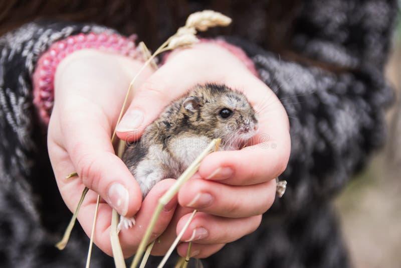 Hamster à disposition au spirng tôt images stock