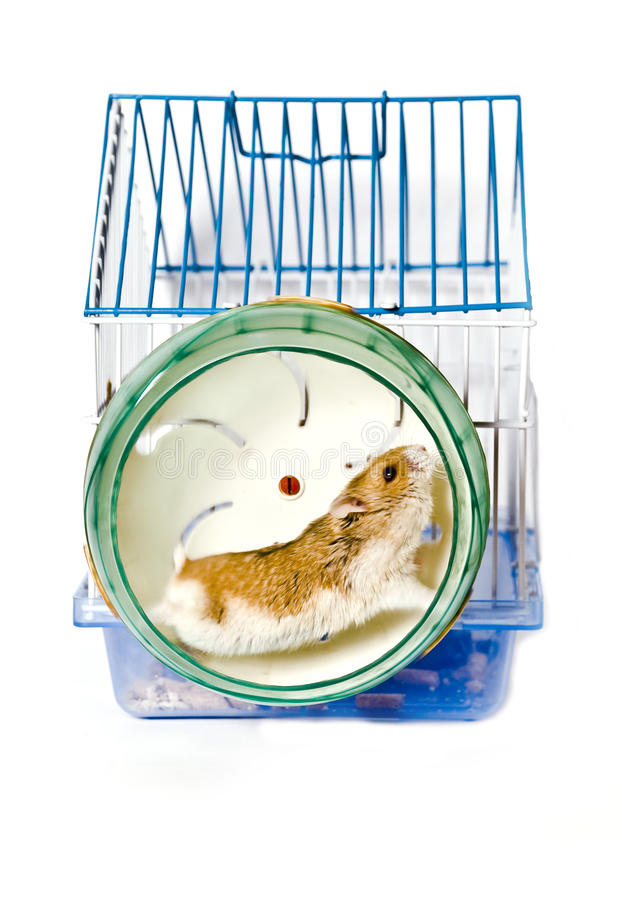 Download Hamster stock image. Image of inquisitive, hungry, mouse - 12650913