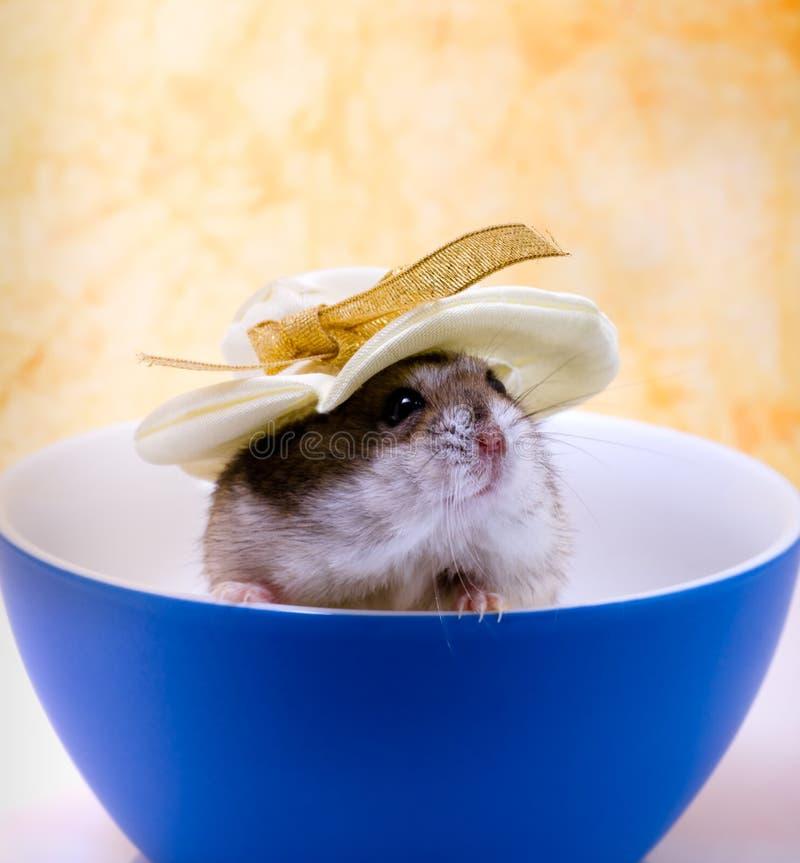 Hamster photo libre de droits