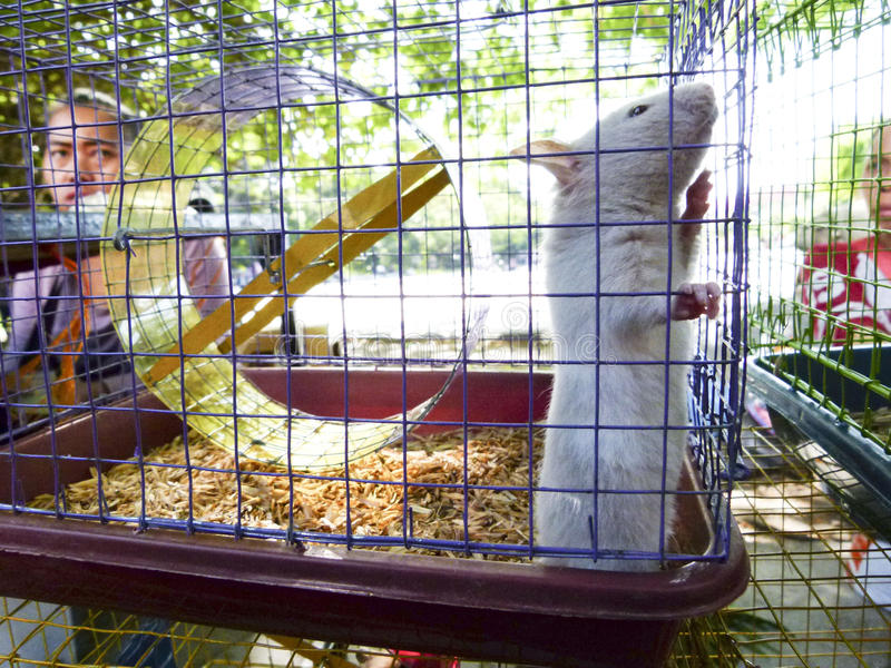 Download Hamster image stock éditorial. Image du animal, solo - 76076769