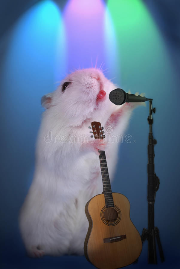 Hamster As  Music Star With Microphone And Guitar On The Stage Stock Photos