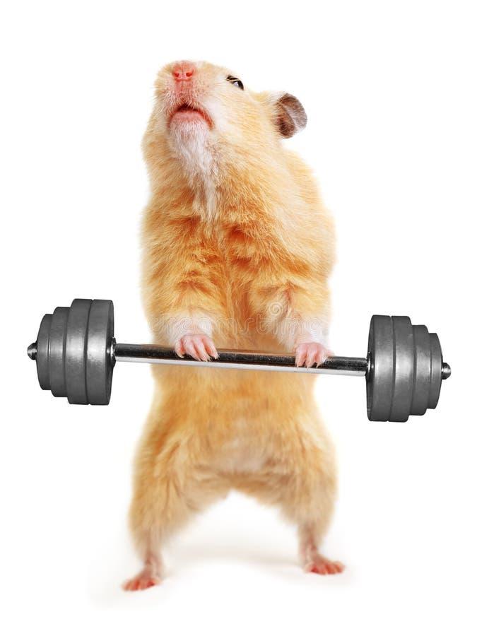 Hamster avec le bar photographie stock