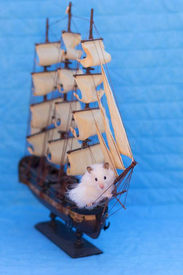 Hamster blanc photo libre de droits