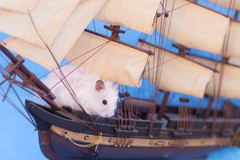 Hamster blanc image stock