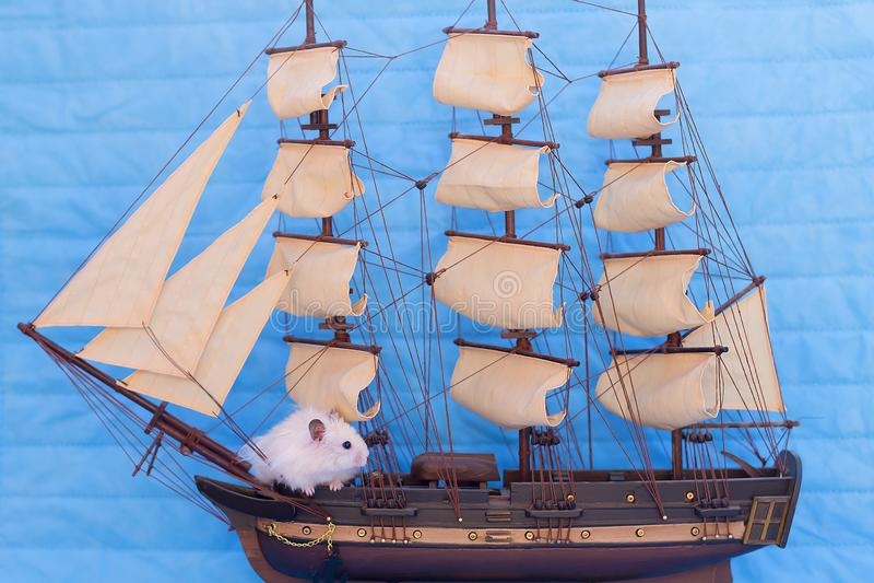 Hamster blanc photos stock