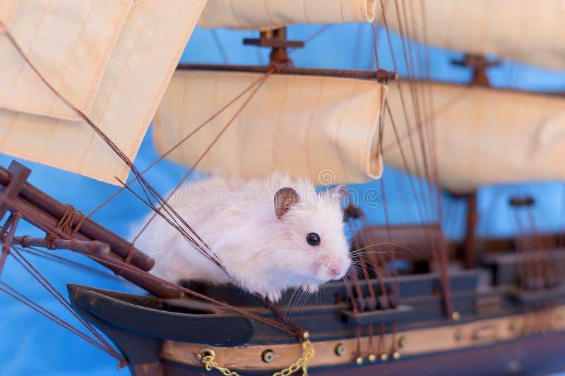 Hamster blanc images libres de droits