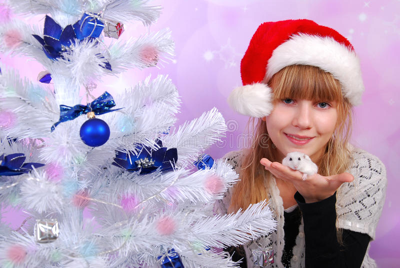 Hamster blanc pour Noël images libres de droits