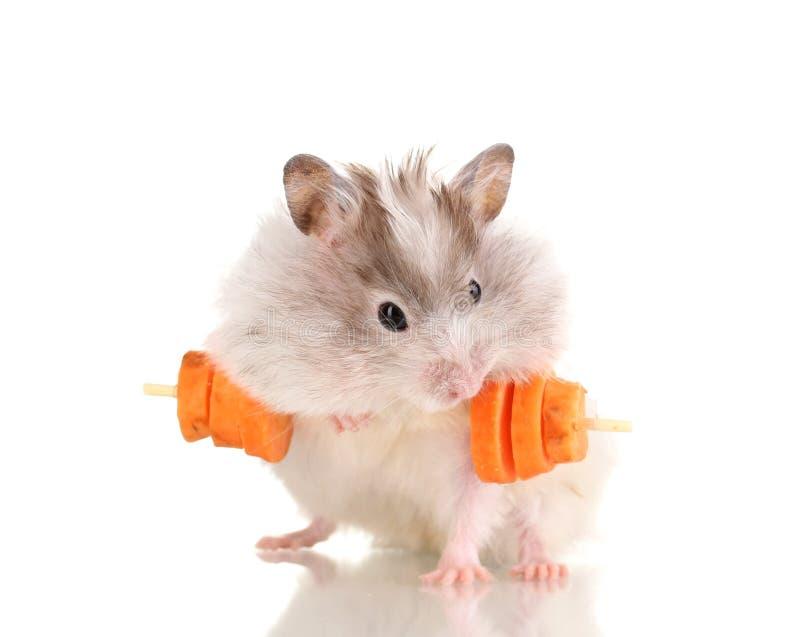 Hamster bonito com barra da cenoura foto de stock