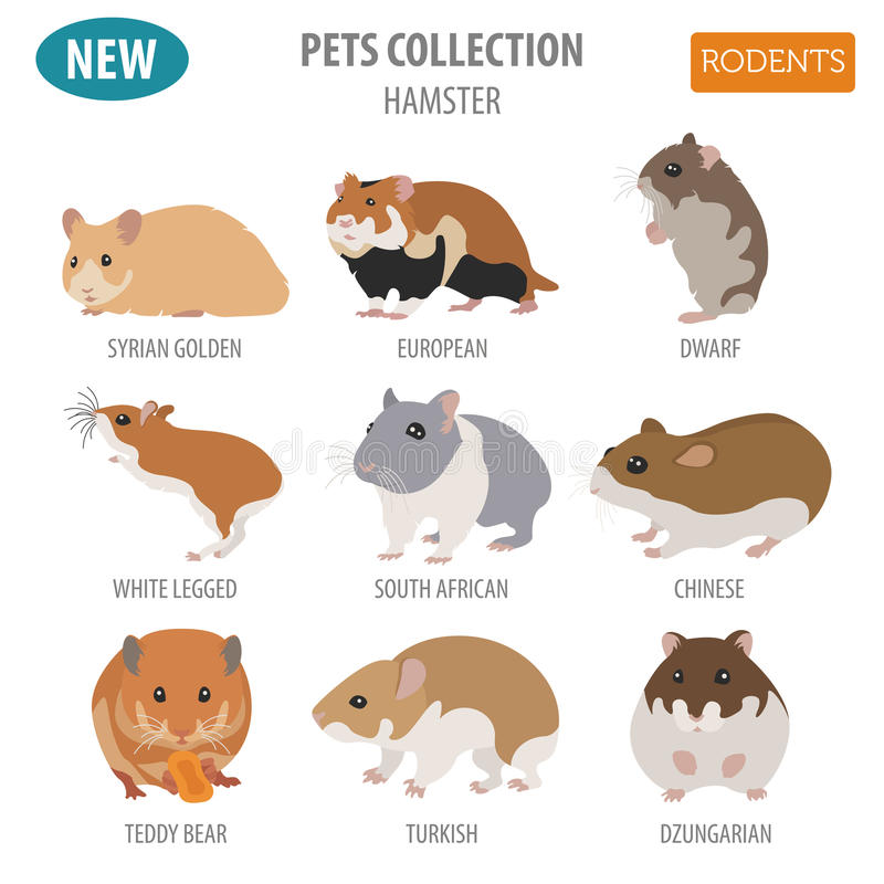 Hamster breeds icon set flat style isolated on white. Pet rodent. S collection. Create own infographic about pets. Vector illustration vector illustration