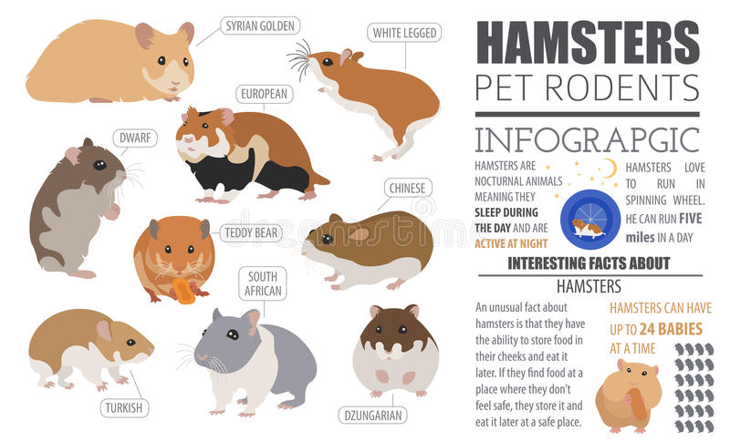 Hamster breeds icon set flat style isolated on white. Pet rodent. S collection. Create own infographic about pets. Vector illustration royalty free illustration