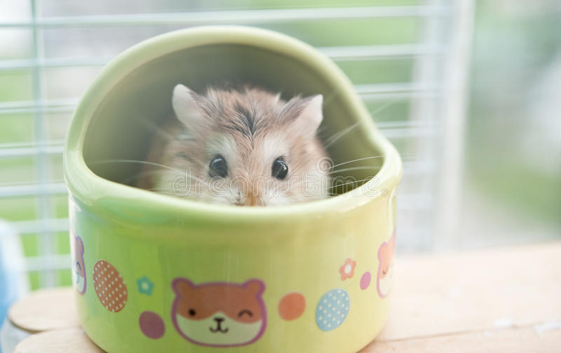 Hamster in cage 3 royalty free stock photos