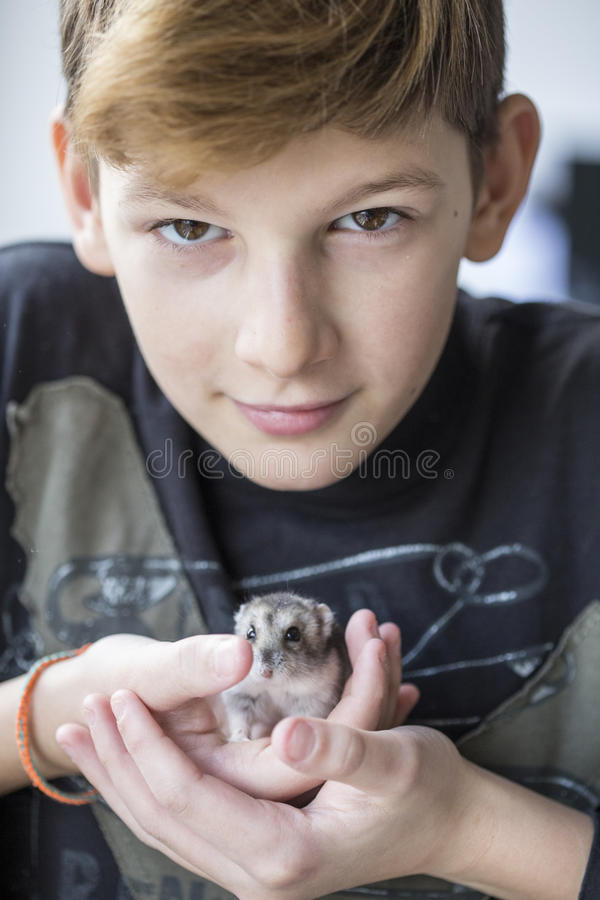 Hamster stock image