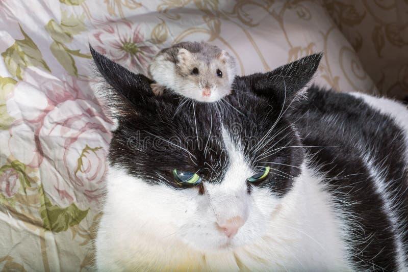Hamster climbs stock photos