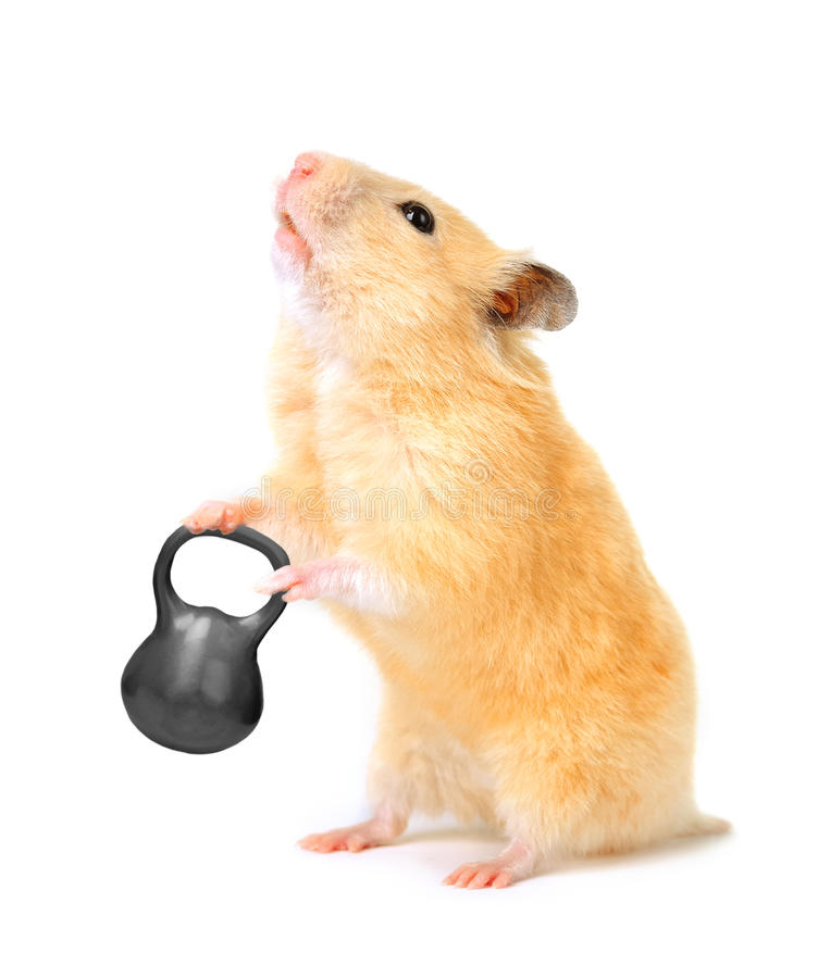 Hamster com barra fotos de stock