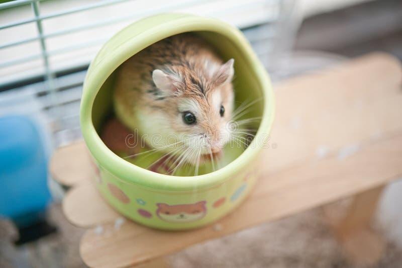 Hamster dans la cage 3 photos stock