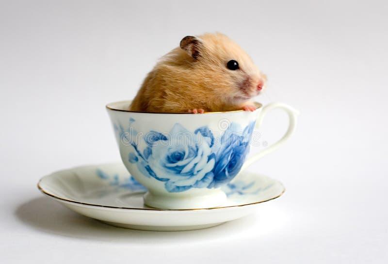 Hamster dans la la tasse de thé image libre de droits