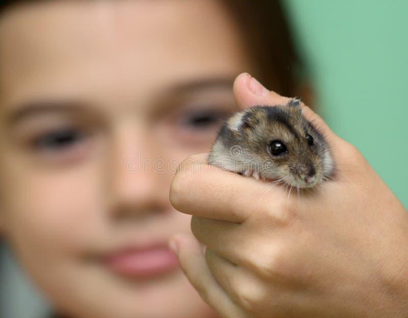 Hamster dans la main de l'enfant photographie stock