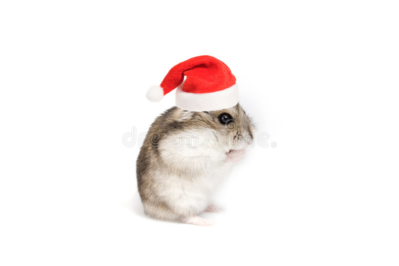 hamster de Noël images libres de droits