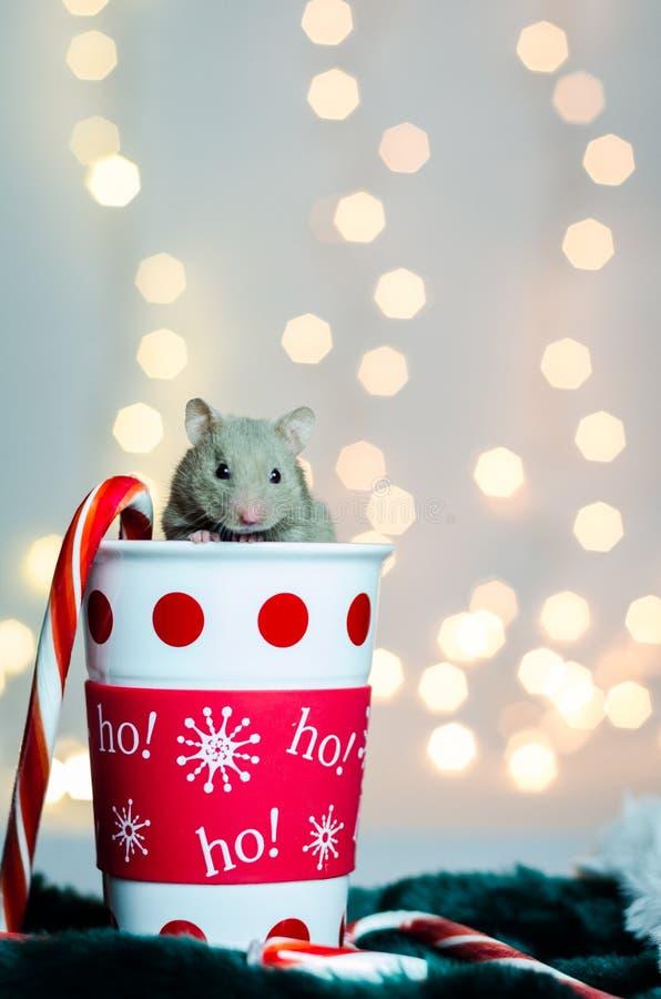 Hamster de vacances de Noël images libres de droits