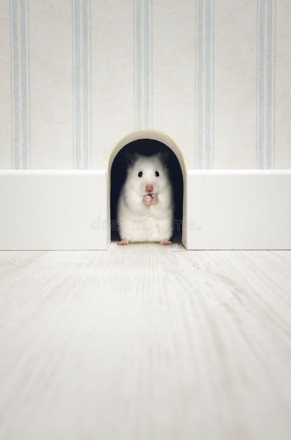 Hamster die zich in zijn leger bevinden stock afbeelding