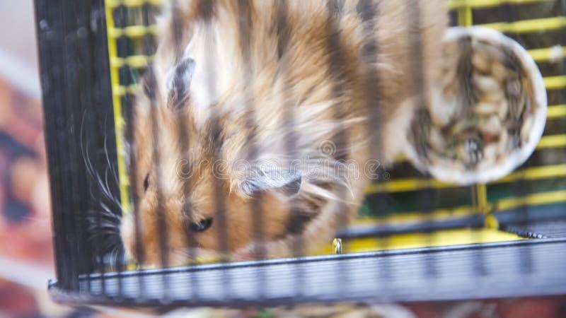 Hamster in een kooi royalty-vrije stock foto's