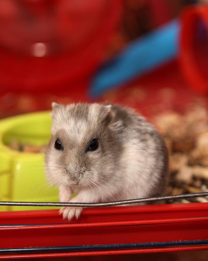 Hamster in een kooi stock fotografie
