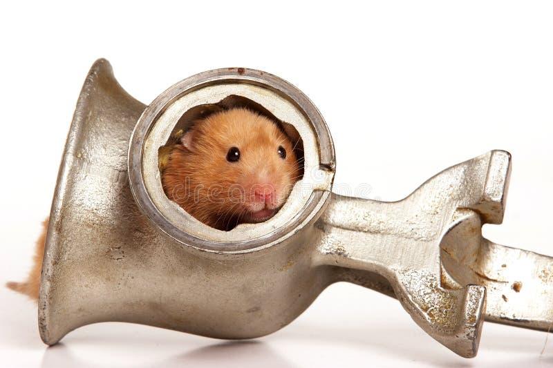 Hamster et hachoir rouges images libres de droits