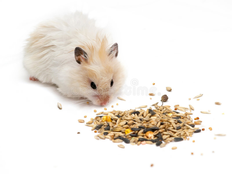 Hamster et textures photographie stock