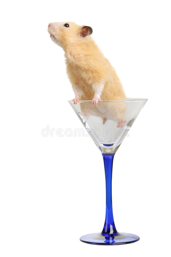 Download Hamster In Glass Stock Photos - Image: 22876753