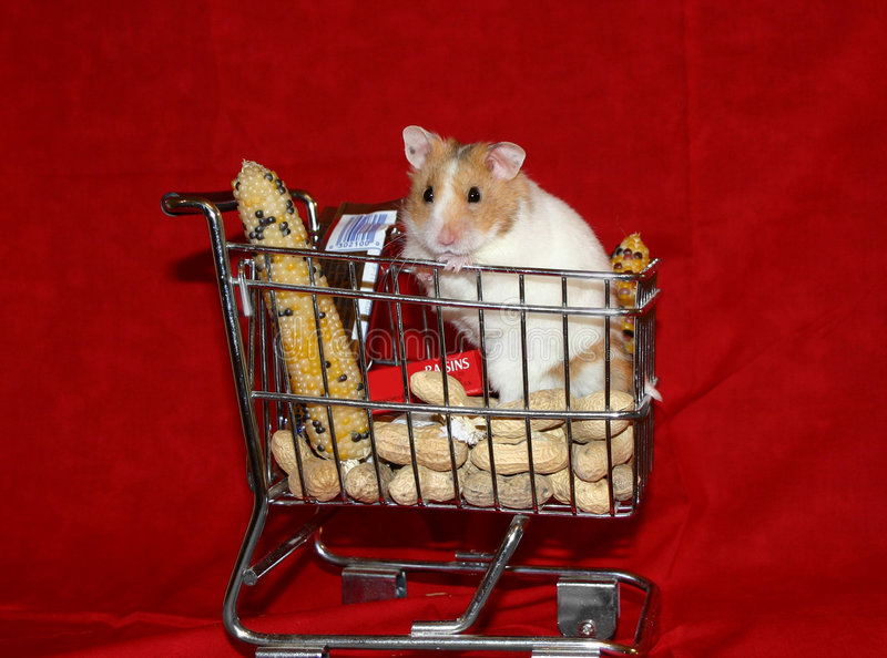 Hamster goes shopping 1 stock photos