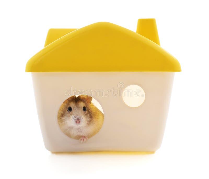 Hamster in het huis royalty-vrije stock afbeelding