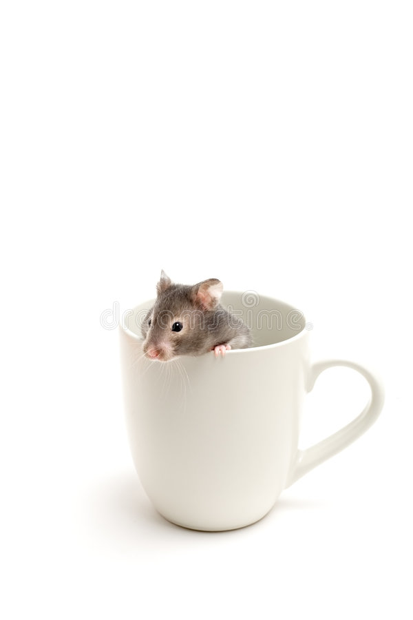 Hamster in hiding royalty free stock images