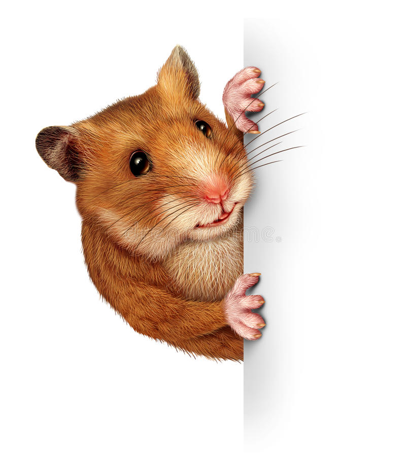Hamster Holding A Blank Card royalty free illustration