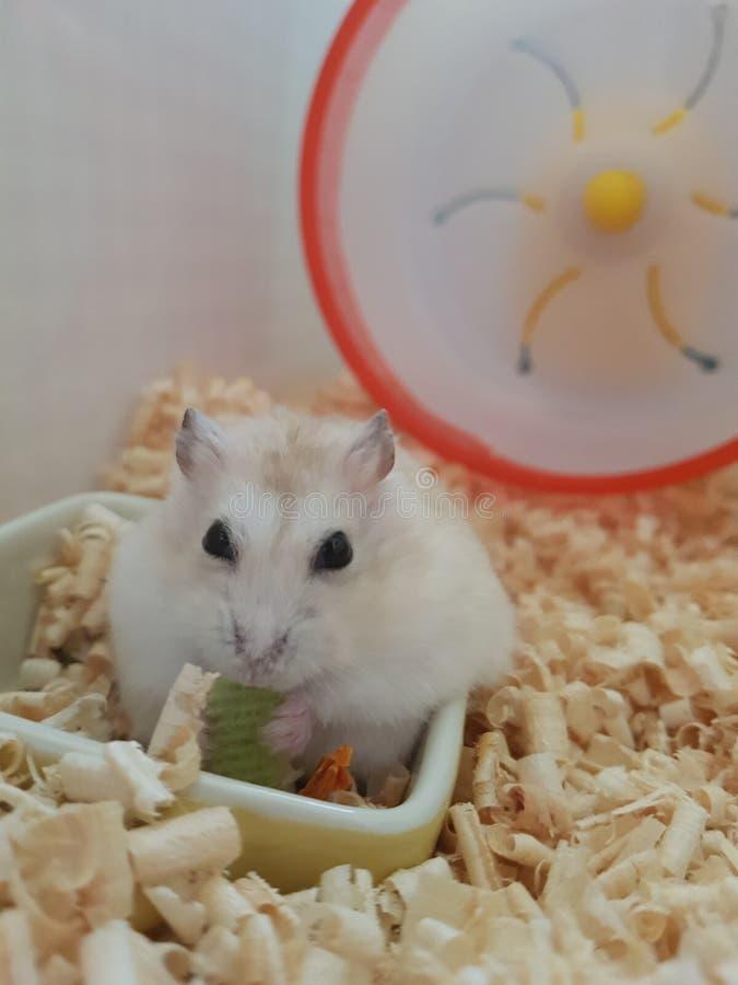 Hamster leuk dier stock foto