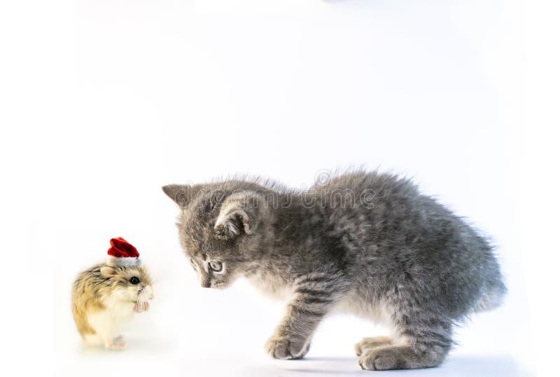 Hamster met Kerstmanhoed die aan de leuke grijze kat bidden stock foto's