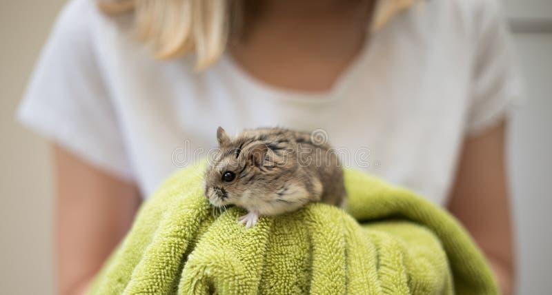 Hamster-Niedlichkeit mit einem Kind stockfoto