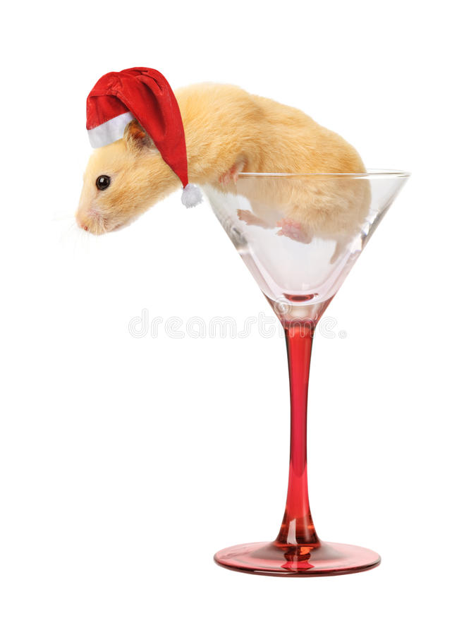 Hamster no vidro fotos de stock